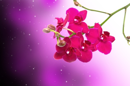 Orchid Flower border design background photo
