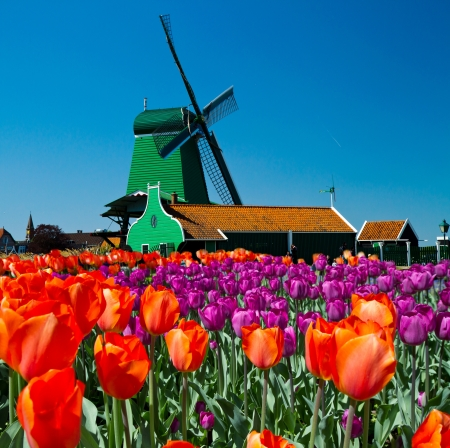 holland windmill: Photo of windmill in Holland with blue sky