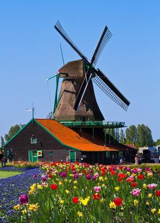Zdjęcie Wiatrak w Holandii z błękitne niebo