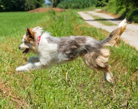 Jumping dog  Stock Photo - 9776970