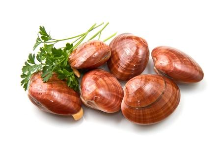 Glatte Muscheln auf einem wei�en Hintergrund
