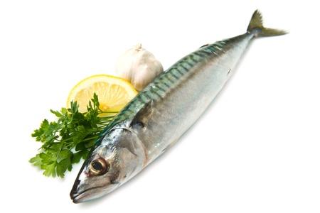 caballa pescado aislada sobre fondo blanco