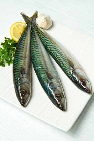 mackerel fish photo