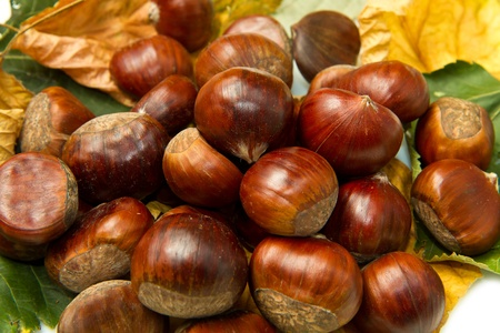 colorfully: Chestnuts