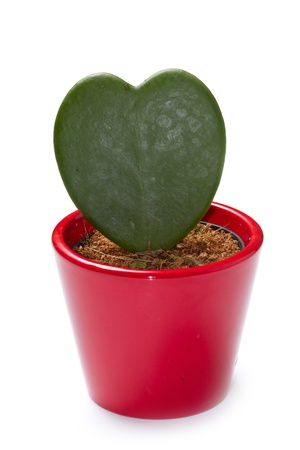 a cactus plant isolated on white background Stock Photo - 11591842