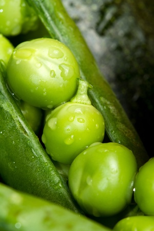 a macro shot of fresh peas Stock Photo - 13296886