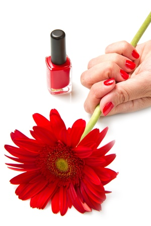 Woman hands with red manicure and red flower photo