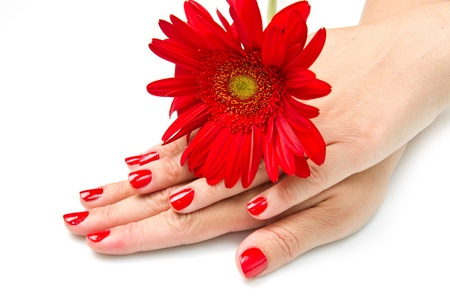Woman hands with red manicure and red flower Stock Photo - 13323203