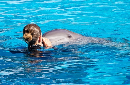 dolphin swimming in the pool  photo