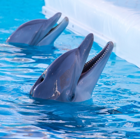 dolphin swimming in the pool