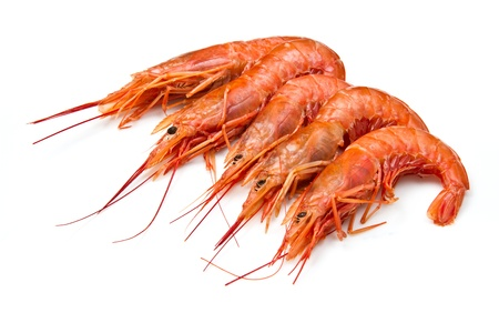 prawns isolated on white Stock Photo - 14645513