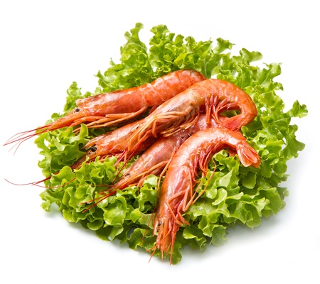 prawns on fresh salad Stock Photo - 14645511