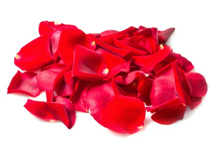 Background of red rose petals Stock Photo - 16790544