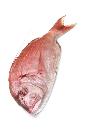 a fresh snapper red fish isolated in white background Stock Photo - 17453576