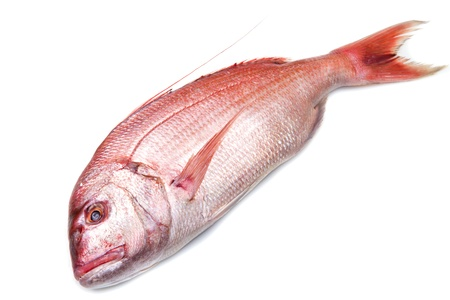 a fresh snapper red fish isolated in white background Stock Photo - 17453580