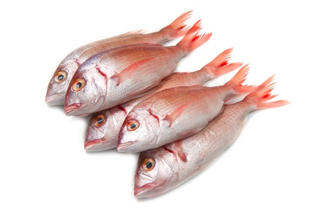 a group of sea bream on white photo