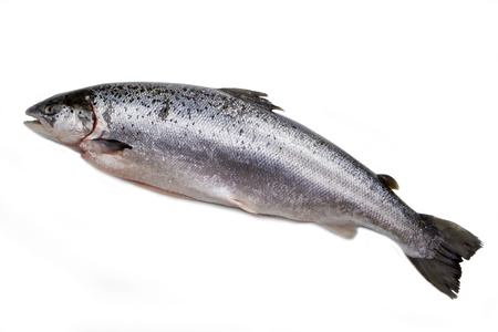 Whole salmon isolated on white  photo