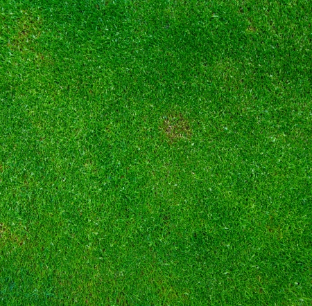dirt texture: background of green grass Stock Photo