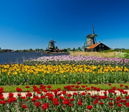 Wiatrak w Holandii z błękitne niebo