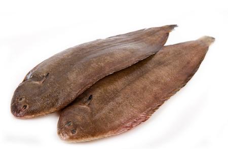 Whole couple fresh sole fish on white background  photo