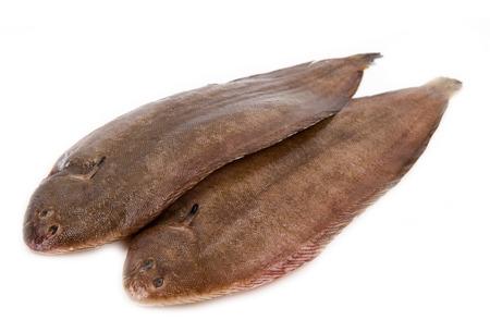 feet soles: Whole couple fresh sole fish on white background