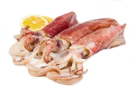 calamar: calamar fresco aislado en el fondo blanco Foto de archivo