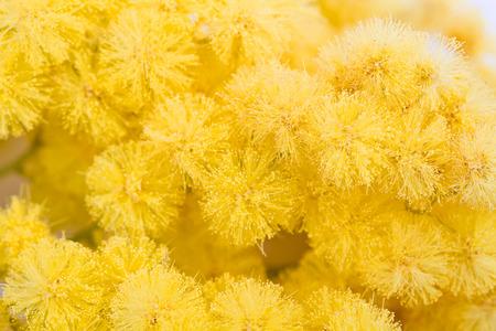 mimosa, Women