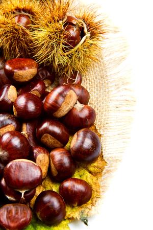 Sweet chestnut on white background. photo
