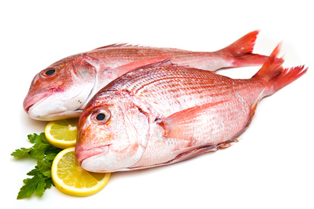 Raw porgy on white background