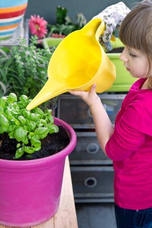gir: Young gir watering basil plant smiling Stock Photo