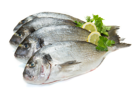 gilt head: group of sea bream with lemon and parsley  isolated on white