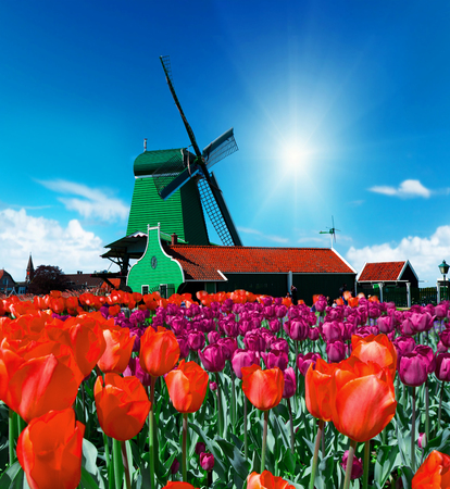 zaan: Photo of windmill in Holland with blue sky