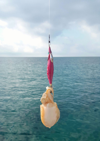 cuttlefish on the fishing rod Stock Photo