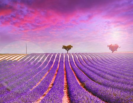 lavender field on pink sunset Imagens