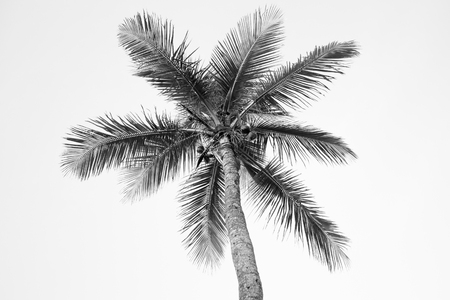 Worms eye view of palm tree in black and white Stock Photo
