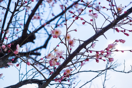 tree spring beautiful Standard-Bild - 105271359