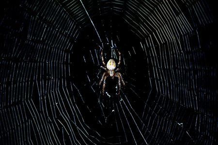 dewey: Spider in the dark