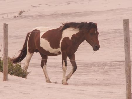Wild horse on the beach Banco de Imagens