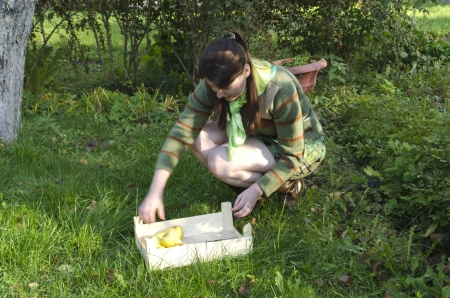 Young woman collecting  and eating winter apples photo
