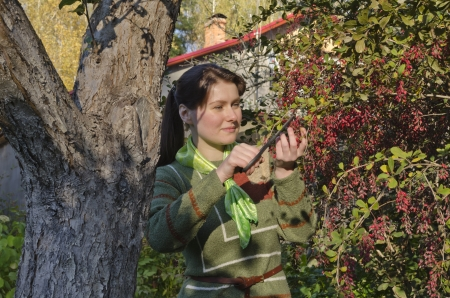 barberry:  Young woman collects berries of barberry in the autumn garden. Russia. Moscow region. Stock Photo