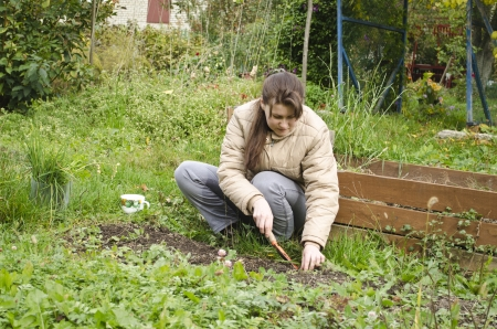 seed bed: Young woman prepares a seed bed for winter  for garlic.  Russia. Moscow region.