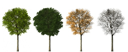 tree - four seasons. 3D render. isolated on white background photo