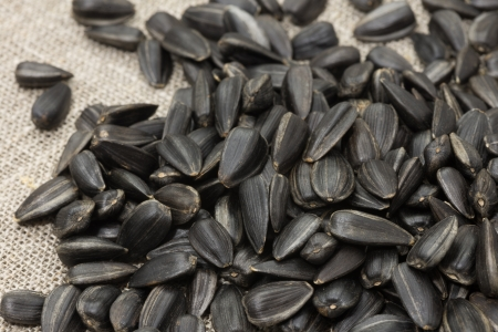 Unrefined sunflower seeds piled on rough fabric