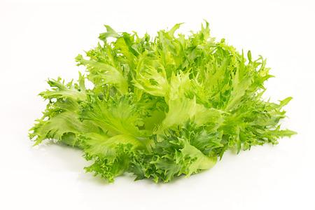 fresh green salad lettuce lolla bionde