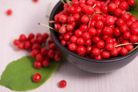 Schisandra chinensis or five flavor berries photo
