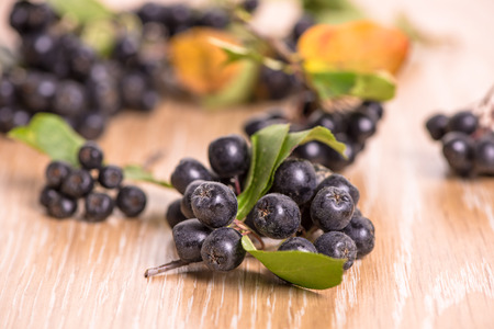 choke-berry (aronia) - branch with berries and leaves
