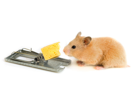 free money, like cheese is only in a mousetrap Stock Photo