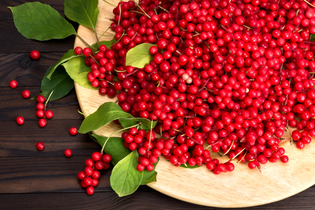 chinensis: Schisandra chinese or five flavor berry Stock Photo