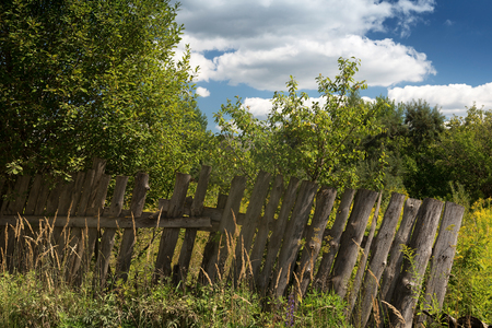 rickety: neglected garden and a rickety fence on a summer afternoon