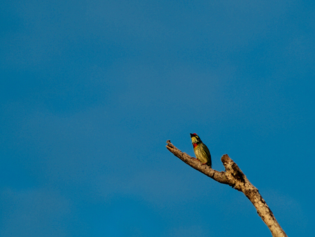 is cloudless: A little bird on a branch in the clear cloudless blue sky background